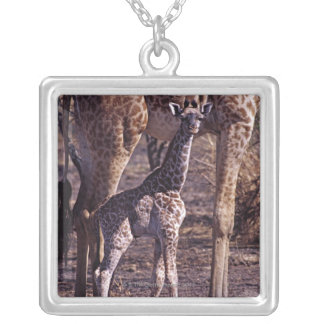 Baby giraffe and mother, Tanzania Square Pendant Necklace