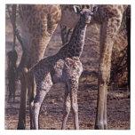 Baby giraffe and mother, Tanzania Tile