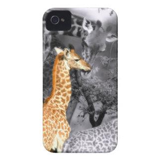 Baby Giraffe Case-Mate iPhone 4 Cases