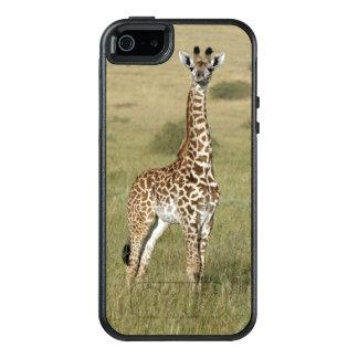 Baby Giraffe In Nairobi OtterBox iPhone 5/5s/SE Case