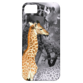 Baby Giraffe iPhone 5 Cases