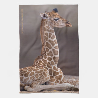 Baby Giraffe Kitchen Towel