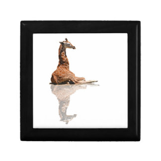 BABY GIRAFFE ON WHITE SMALL SQUARE GIFT BOX