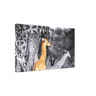 Baby Giraffe Stretched Canvas Print