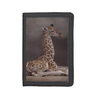 Baby Giraffe Wallet