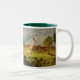 Baby giraffe wildlife mugs & cups