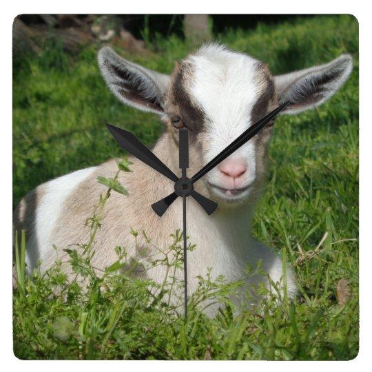 Baby Goat Barnyard Farm Animal Grey Grey Chevron