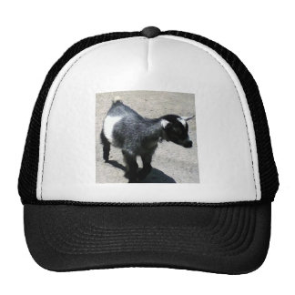 Baby Goat Cap