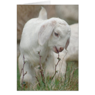 Baby Goat Cards