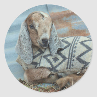 Baby Goat in Sweater Stickers