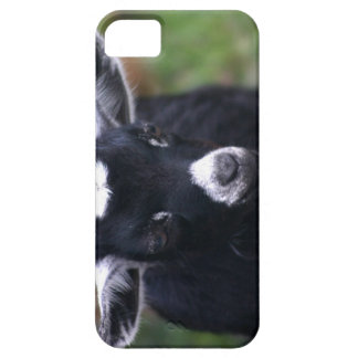 Baby Goat iPhone 5 Cases