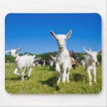 Baby Goats Mousepad
