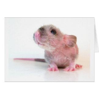 Baby Gobi Rat Cards