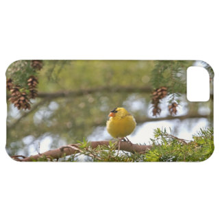 Baby Goldfinch Photo Cover For iPhone 5C