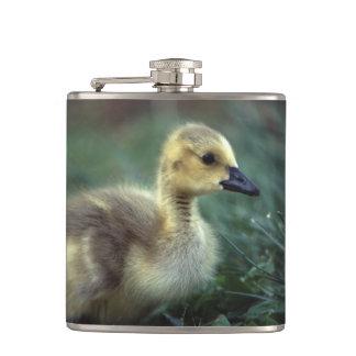 baby goose hip flasks