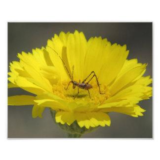 Baby Grasshopper Photo Art