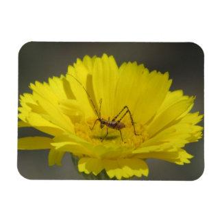 Baby Grasshopper Magnets