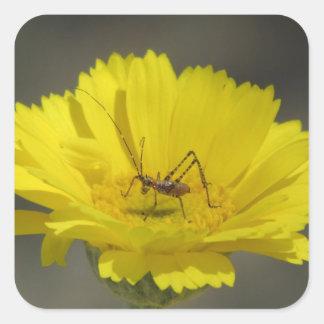 Baby Grasshopper Square Sticker