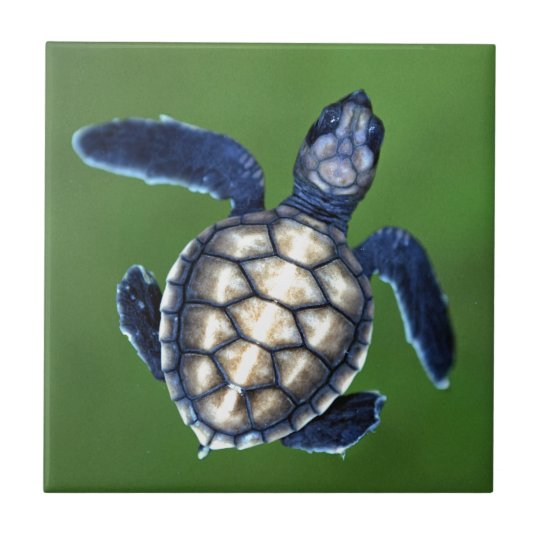 Baby green turtle small square tile