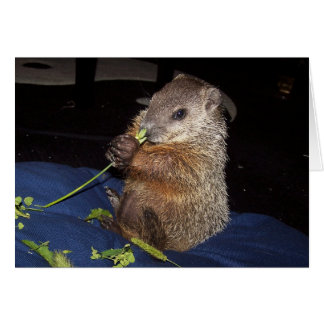 Baby Groundhog Card 2