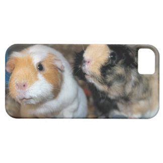 Baby Guinea Pigs iPhone 5/5S, Barely There Case