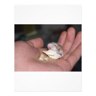 baby_hamster_eating_chips flyer design