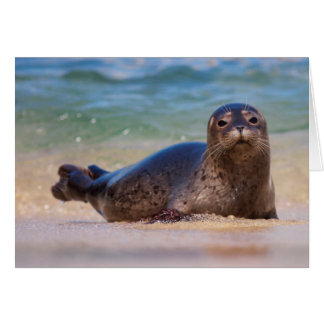 Baby Harbor Seal in Water Card