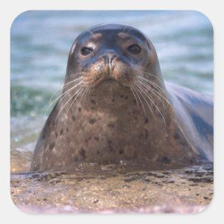 Baby Harbor Seal on the Beach