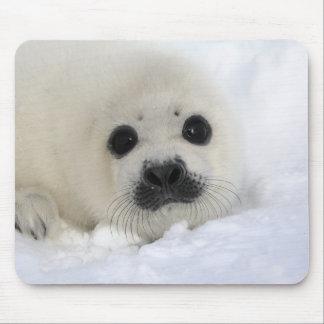 Baby Harp Seal Mouse Mat