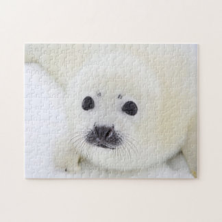 Baby harp seal pup on ice of the White Sea Jigsaw Puzzle