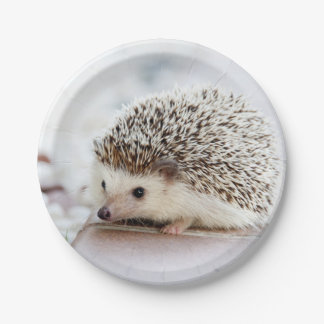 Baby Hedgehog 7 Inch Paper Plate