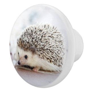 Baby Hedgehog Ceramic Knob