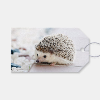 Baby Hedgehog Gift Tags