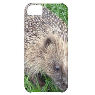Baby Hedgehog iPhone 5C Case