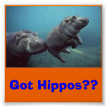baby-hippo, Got Hippos?? Poster