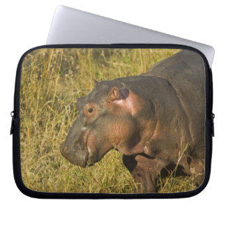 Baby Hippo out of water away from adults along Laptop Sleeve
