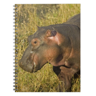 Baby Hippo out of water away from adults along Notebook