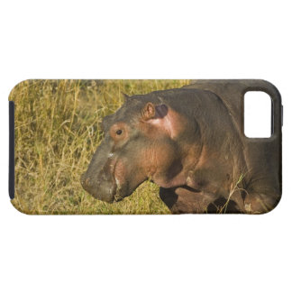 Baby Hippo out of water away from adults along Tough iPhone 5 Case