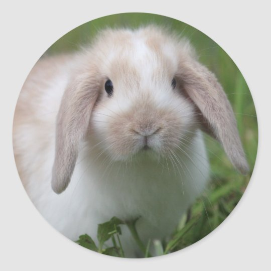 Baby Holland Lop Bunny Classic Round Sticker