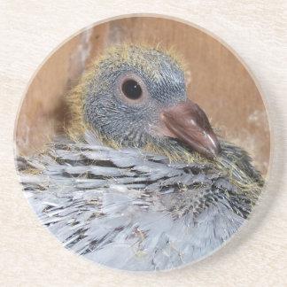 Baby Homing Pigeon Coaster
