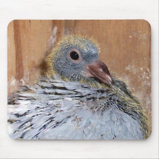 Baby Homing Pigeon Mousepad