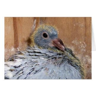Baby Homing Pigeon Notecard Note Card