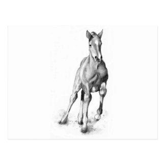 Baby Horse, Colt Running: Pencil Art Postcard