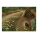 Baby Horse Invitation