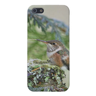 Baby Hummingbird Sticking Out Its Tongue iPhone 5 Covers