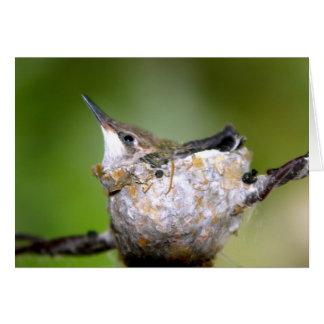 Baby hummingbirds greeting card