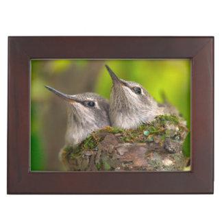 Baby hummingbirds keepsake box