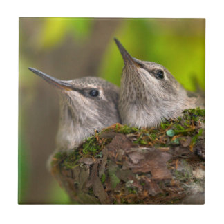 Baby hummingbirds small square tile