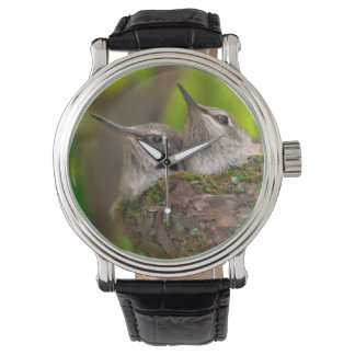 Baby hummingbirds wrist watch
