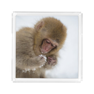 Baby Japanese Macaque | Snow Monkey Acrylic Tray